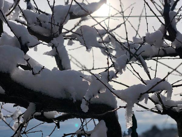 IPhoneX Photo Photo Ghiaccio Neve Snow Nature Day