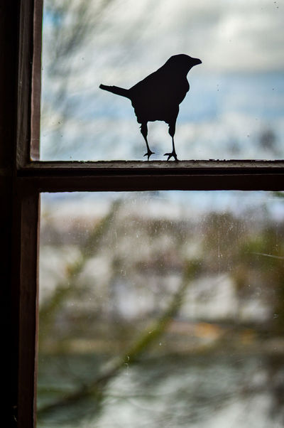 Watch out for birds City Life Bird Blue Sky Building Exterior Dummy Focus On Foreground Looking Through Window Window Window Frame Window View