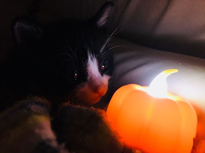 Do you remember the light of your destiny? Cat Light And Shadow