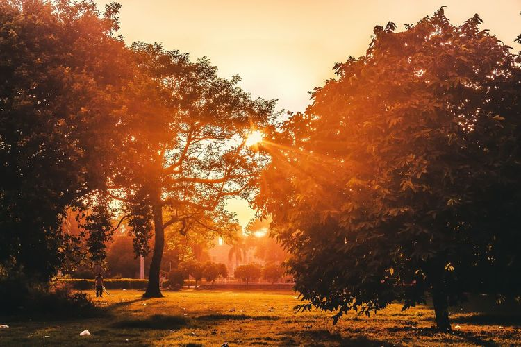 Sunrays Emitting From Trees At Park