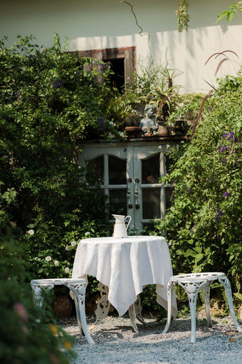 Plant Seat Tree Nature No People Day Chair Table Growth Front Or Back Yard Outdoors Absence Architecture Green Color Flower Potted Plant Flowering Plant Focus On Foreground Beauty In Nature Formal Garden Hedge