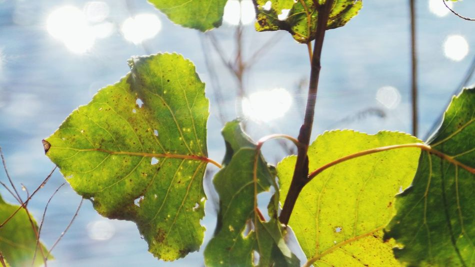 Leaf Leaf Vein Close-up Water Focus On Foreground The Places I've Been Today September 2016 Autumn 2016 Bokeh Defocused Erfurt I Love My Family Autumn🍁🍁🍁 Green Green Green!