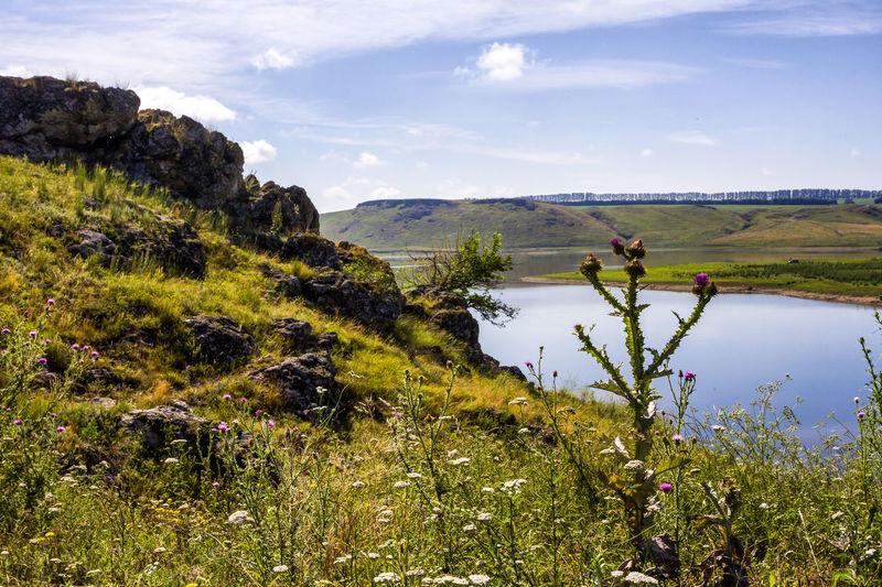 Idyllic landscape in summer