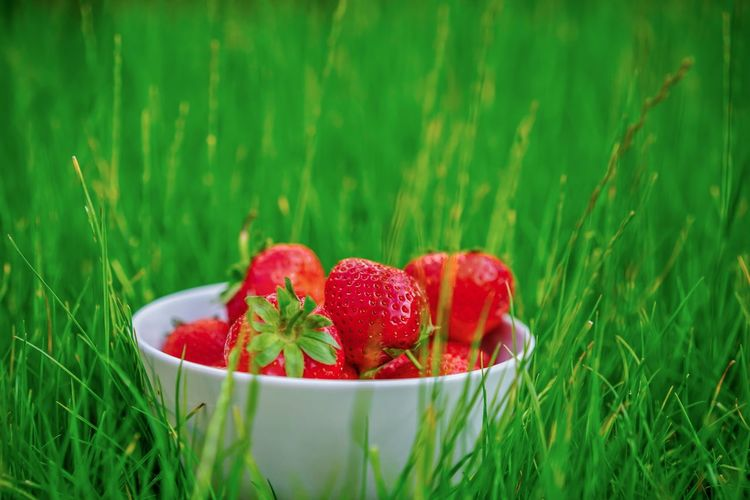 Strawberries EyeEm Selects EyeEm Best Shots First Eyeem Photo Hello World Gesund Obst Sweet Erdbeeren Red Fruit Strawberry Berry Fruit Freshness Healthy Eating Food And Drink Food Grass Green Color Plant Wellbeing Nature Growth No People The Still Life Photographer - 2018 EyeEm Awards