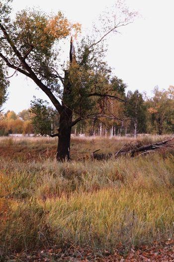 осень Природа мои фото учусьфотать MyPhotography Landscape 10likes Autumn фотолюб Vscocam