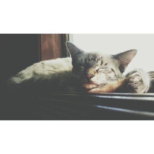 ?? Cat nap ??