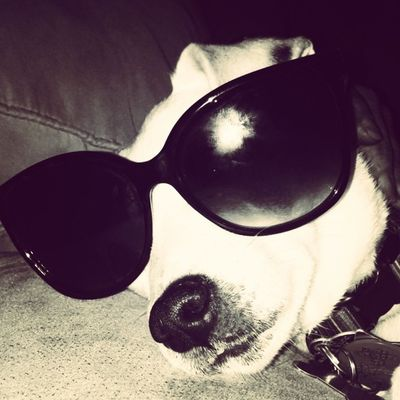 Sassy is too sassy for you. Haterz gonna hate. ?? Jackrusselterrier