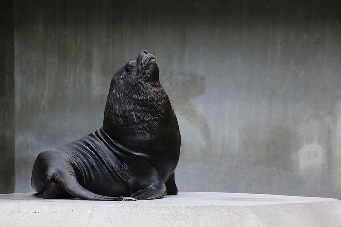 Animal Fat Animal Sea Lion Sea Lions Zoo Zoo Animals