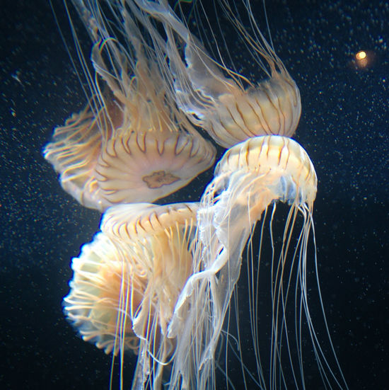 Berlin Zoo reflections Berlin Refelctions Sea Life