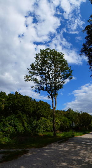 Lobau Landscape, Vienna, Austria Beauty In Nature Blue Cloud - Sky Day Landscape Lone Nature No People Outdoors Road Scenics Sky Tranquil Scene Tranquility Tree