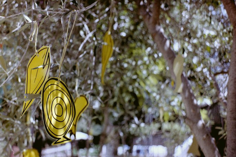 Creativity DIY Olive Tree Plant Animal Representation Close-up Cut Out Decoration Film Photography Fish Fish Figure Ideas No People Paper Paper Figure Plant Representation Selective Focus Tableau Tree Yellow