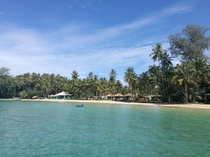 UnderSea Tree Water Palm Tree Sea Beach Blue Tropical Climate Sand Tourist Resort