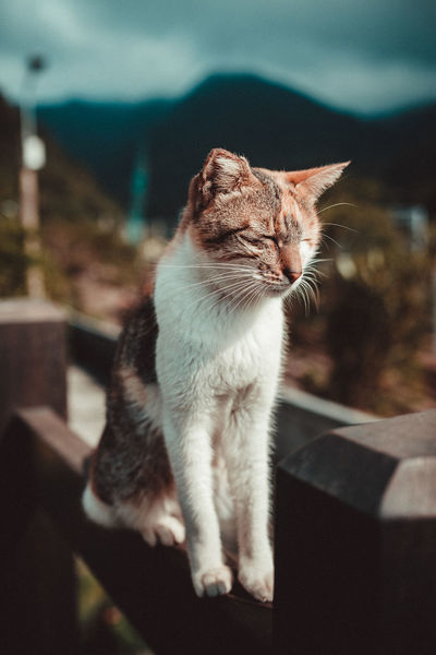 Lost in Houtong cat village, New Taipei City Animal Themes Cat Village Day Domestic Animals Domestic Cat Feline Houtong Cat Village Indoors  Mammal New TaipeiCity No People One Animal Pets Sitting Taipei Taiwan