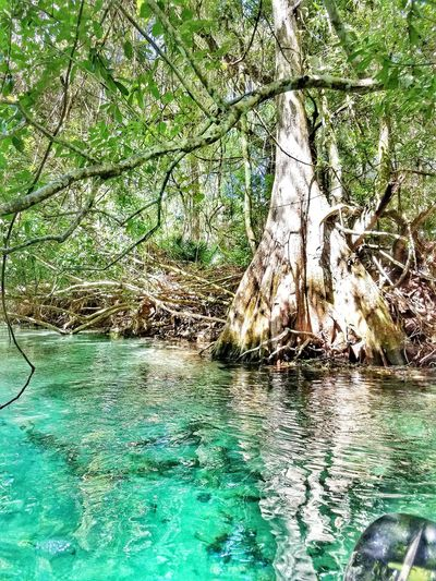 Day Green Color Water Reflection No People Full Frame Backgrounds Outdoors Close-up Nature River Springs Florida EyeEm Selects