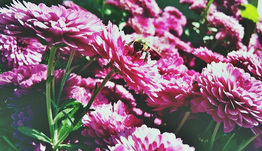 Flower Beauty In Nature Plant Nature Season  Botany Day Bunch Of Flowers Flower Head Freshness Bee