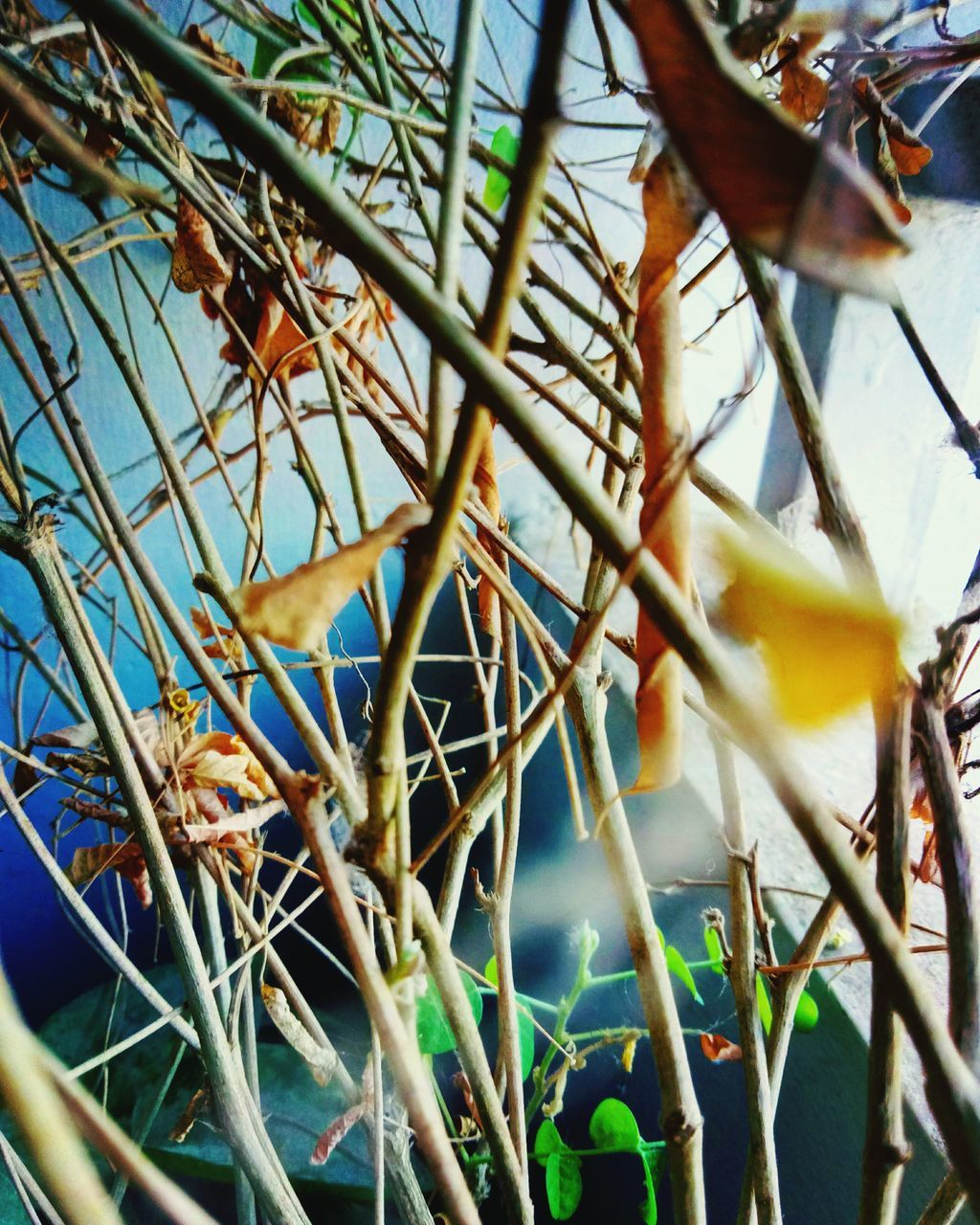 selective focus, growth, close-up, outdoors, no people, day, plant, flower, branch, nature, complexity, tree, fragility, beauty in nature, sky