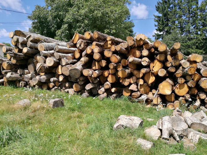 Outdoors Woodpile Timber Fragility Forestry Industry Beauty In Nature Tree Branch Green Color Agriculture Day