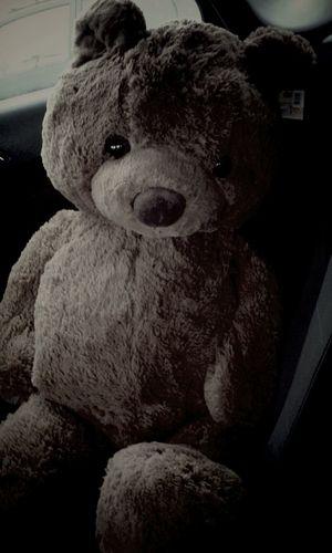 Teddy Bär ♥ Hello World Lala