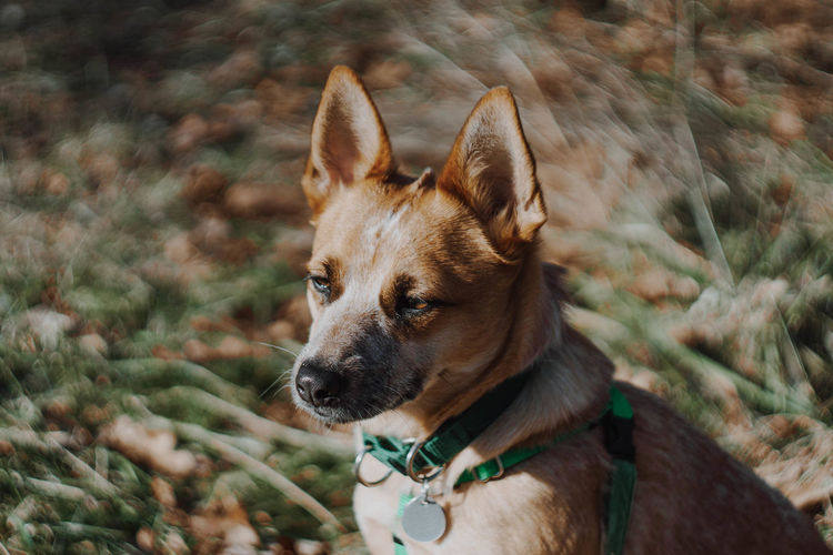 One Animal Domestic Animals Dog Domestic Canine Pets Mammal Animal Themes Animal Vertebrate Looking Away Looking Pet Collar Collar No People Focus On Foreground Day Plant Nature Animal Body Part Outdoors Animal Head