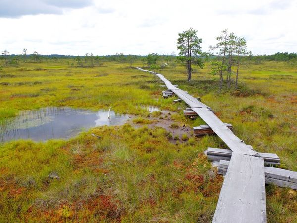 Duckboards at Torronsuo National Park, Finland Bog Day Duckboard Grass Green Color Hiking Landscape Nature No People Outdoors Path Path In Nature Pathway Reservoir Scenics Swamp Swamp Photos Torronsuo Tree Tree Water