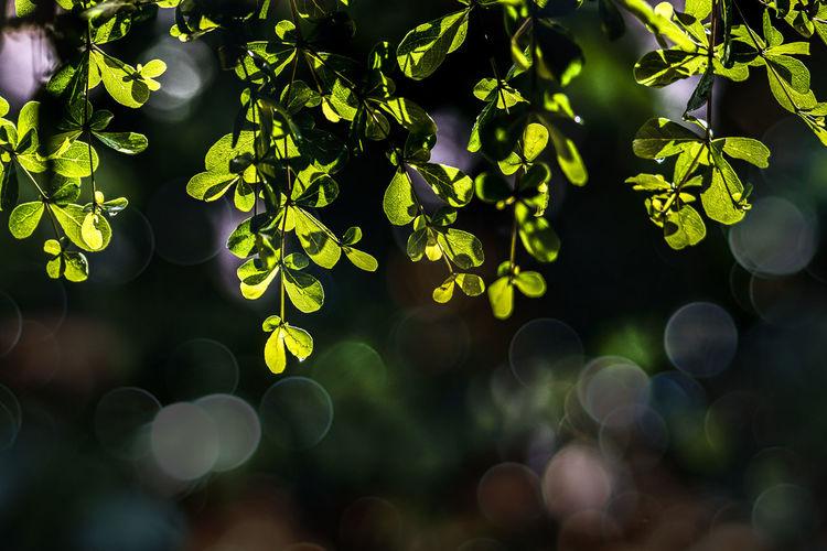 Defocused Image Of Plants