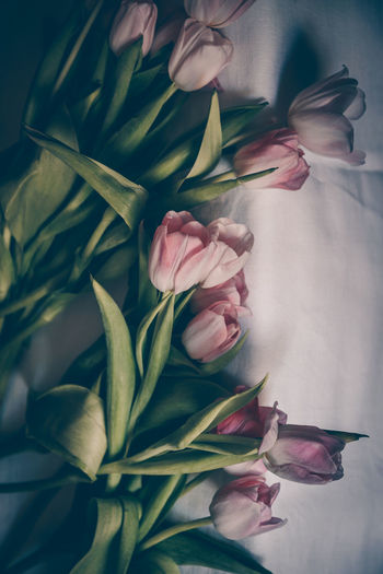Tulips Tulips Pink Color Still Life Flat Lay Moody Spring Spring Flowers Floral Plant Dark And Moody Botany Garden Flower Head Flower Leaf Close-up Plant Pod Blossom Petal Plant Life The Still Life Photographer - 2018 EyeEm Awards