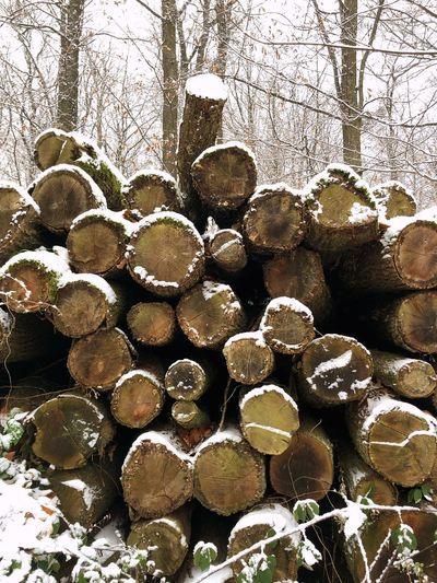 A snowy wood