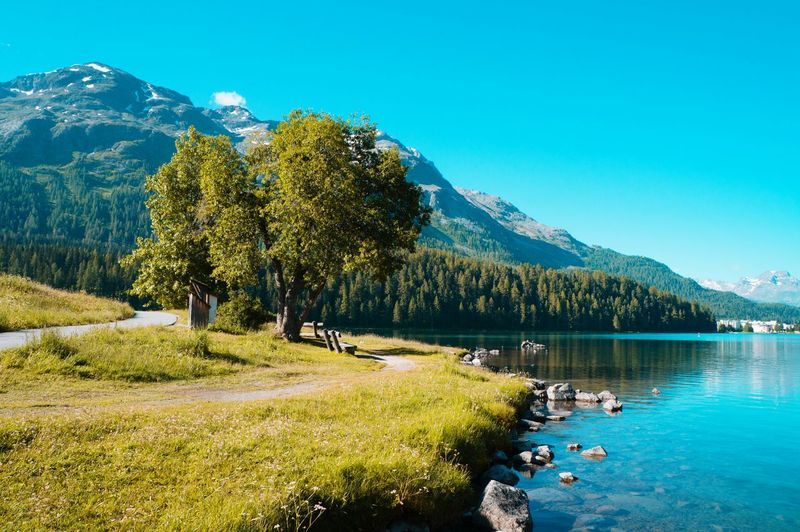 Lake of st Moritz Lake Lake View Lakescape Stmoritz  Swiss Swiss Alps Swiss Mountains Swissbeauty Svizzera Mountain Nature Naturelovers Nature Photography Beauty In Nature EyeEm Nature Lover EyeEmNewHere EyeEm Selects EyeEm Best Shots Beginnerphotographer Tree Water Mountain Blue Lake Summer Pine Tree Pinaceae Forest Sky Rocky Mountains Geology Calm