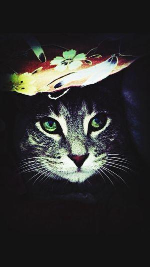 Good morning, EyeEm!! Reedit with Eva filter. Mel&BomBi Tadaa Community Cat I Love My Cat