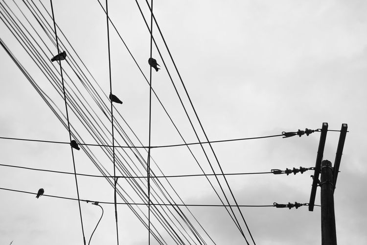 Birds Brazil Campinas Centro City Cotidiano Down People Real Life Sao Paulo - Brazil Street Symetry Urban