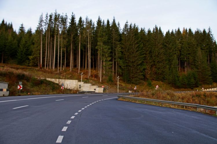 Road Tree Transportation Forest Plant Land Nature No People Road Marking Day Travel Travel Destinations Marking