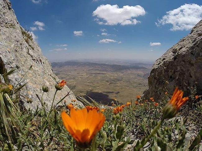 Tunisia IgersTunisia Flower Mountain Cloud Sky Wikilovesearth Wletn2016 Wikimediatn نهر اﻷزهار :) نهارنا تحفون :)