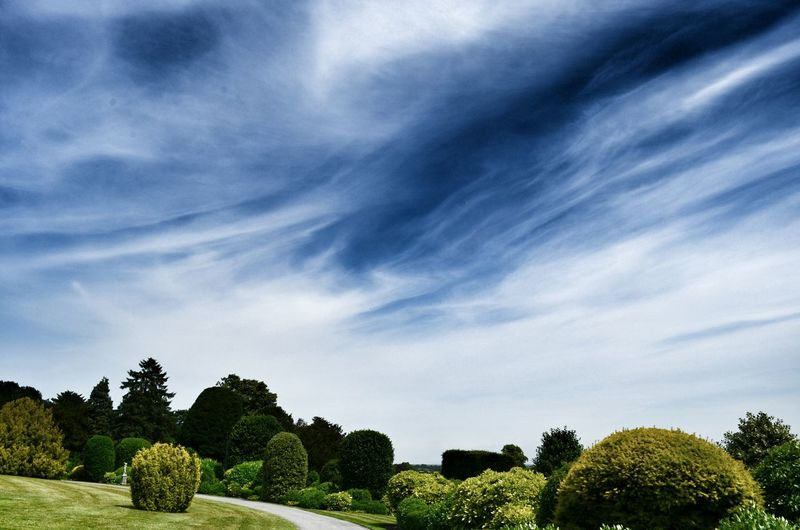 Tranquil green garden with shrub and trees against sky