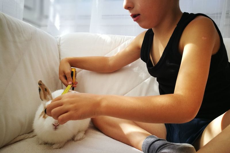 Midsection Of Boy Measuring Rabbit On Sofa At Home