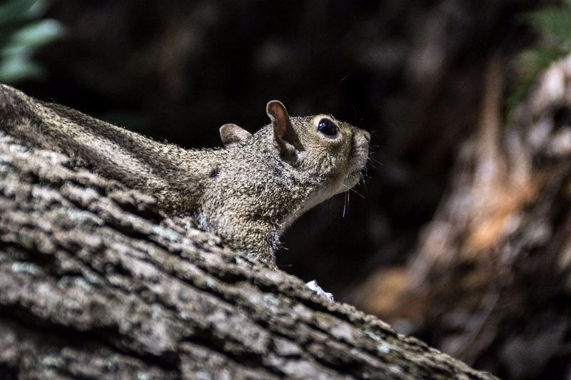 Close-up side view of squirrel on branch
