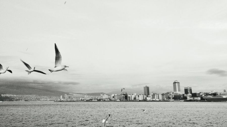 Seagulls flying over river in city