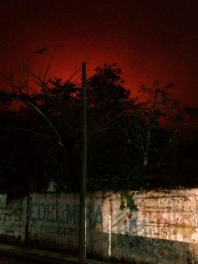 Night Tree Red Sky