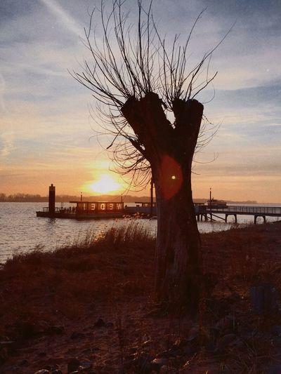 31/365 Sonnenuntergang 🌅 an der Elbe RNIColibri Eyeemgermany Photooftheday Sorcerer86 Bilsbekblog Photo365 Iphone6 IPhoneography Eyeemwedel