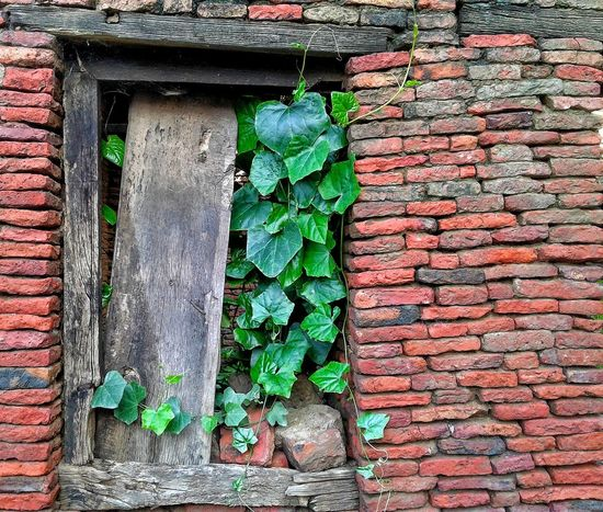 frame inside frame Greenery Nature Photography Mobile Photography S7edgephotography Ivy Full Frame Leaf Brick Wall Close-up Architecture Building Exterior Built Structure Plant Green Color Creeper Closed Rough Textured  Wall