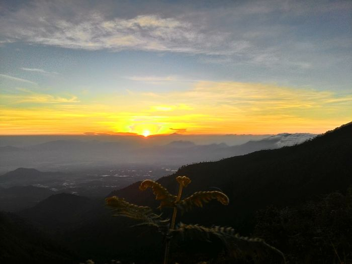 The golden sunrise 😍 Golden Sunrise Sunrise GoldenSunrise West Java  Malabar Mountains PARIS VAN JAVA Beauty Indonesia Nature Beauty In Nature EyeEm Nature Lover EyeEm Gallery EyeEm Mobile Photography