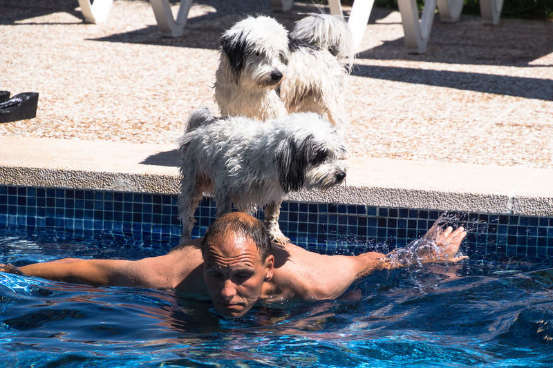 Dog standing on man in swimming pool