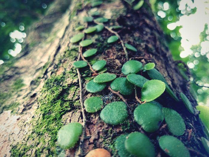 Eyem Nature