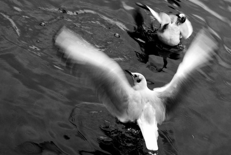 Animal Themes Animals In The Wild Bird Birds Of EyeEm  Canon 70d Canon Eos 350d EOS Lakeside Thurrock One Animal Thurrock Two Animals Water Wildlife