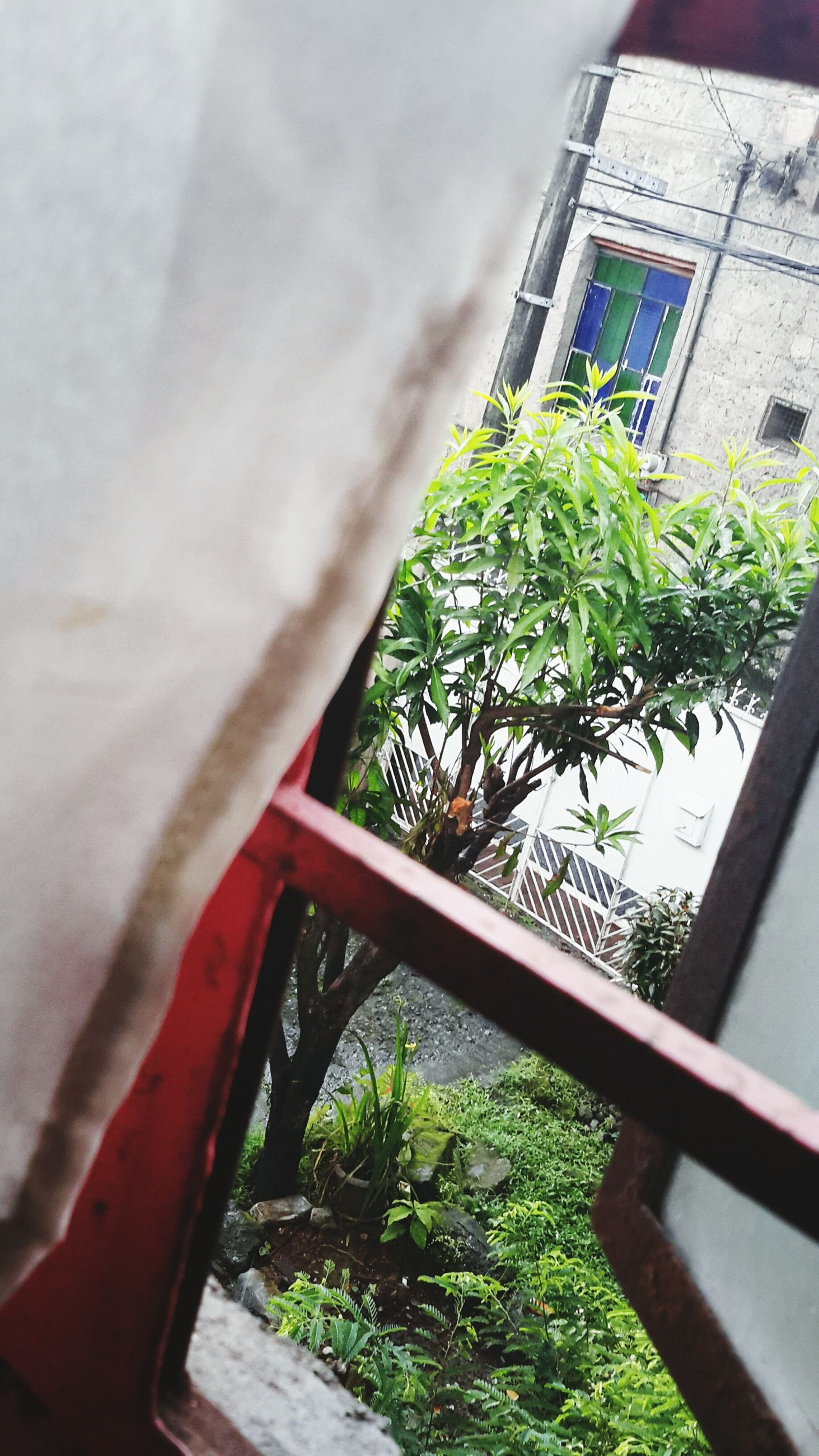 window, built structure, architecture, building exterior, tree, growth, house, plant, low angle view, green color, wall - building feature, potted plant, day, front or back yard, no people, balcony, residential structure, indoors, window sill