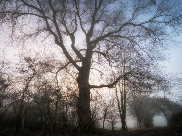 Foggy day. Bare Tree Beauty In Nature Branch Day Deciduous Tree Fog Foggy Landscape Nature No People Outdoors Rural Scene Scenics Silhouette Sky Tranquil Scene Tranquility Tree Treetop