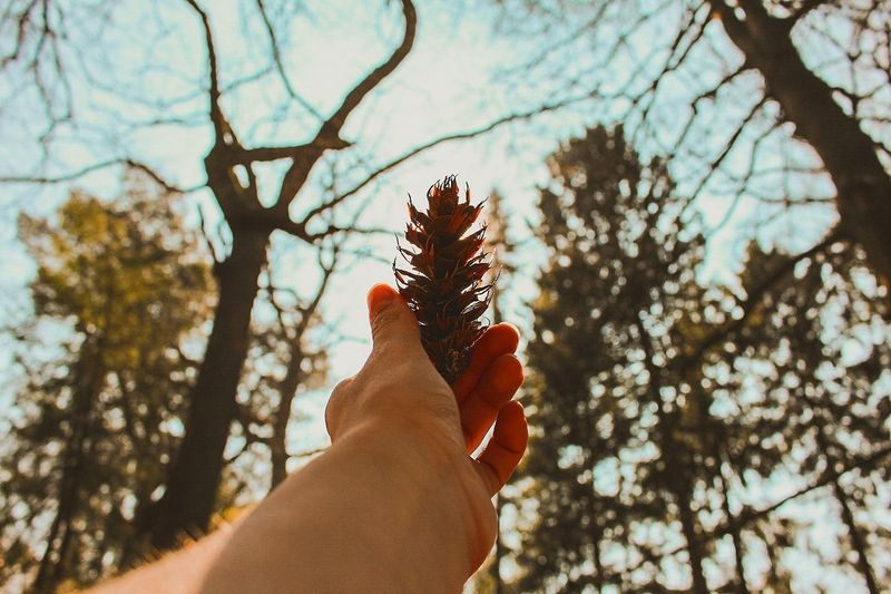 Human Hand Human Body Part One Person Personal Perspective Holding Tree People Day Outdoors Nature Adults Only Close-up Adult Sky Only Women One Woman Only Beauty In Nature