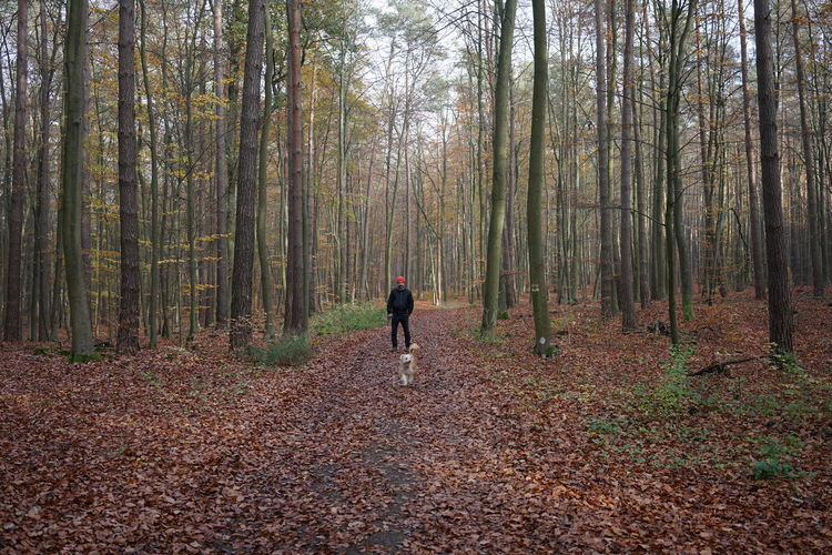 Rear view of person walking in forest during autumn