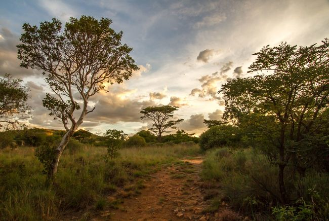 Golden Hour Oppieberg South Africa Tree Nature Landscape Sky Beauty In Nature Cloud - Sky Scenics Field Tranquility No People Growth Grass