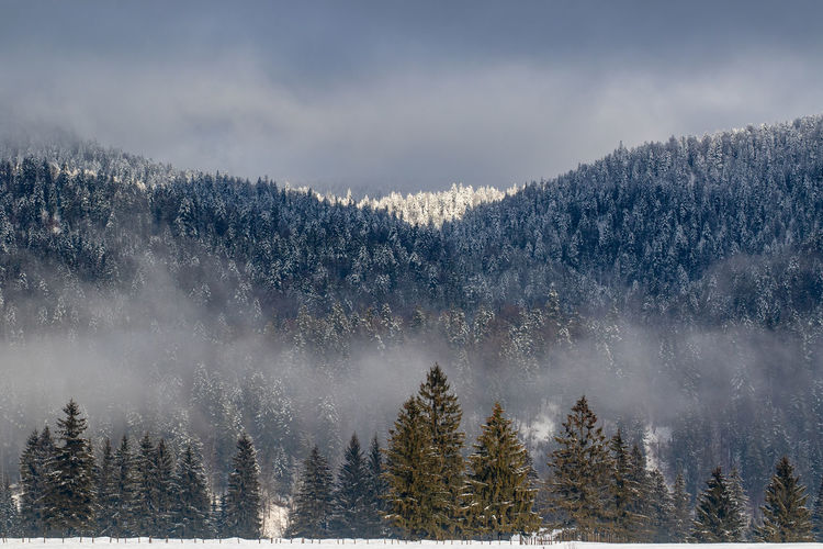 snowcapped forest in the bavarian alps Tree Plant Cold Temperature Snow Winter Scenics - Nature Forest Beauty In Nature Land Tranquil Scene Nature Tranquility Non-urban Scene Environment Sky Mountain WoodLand Day Pine Tree Coniferous Tree Outdoors Snowcapped Mountain Evergreen Tree Pine Woodland Foggy