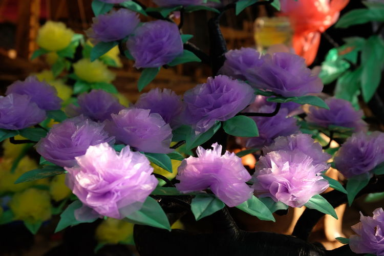 Handmade For You Flower Plastic Tree Freshness Fragility Nature Plant Beauty In Nature Purple Petal Flower Head Close-up No People Outdoors Water Growth Day